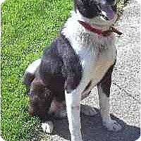 Adopt A Pet :: Ross - Tiffin, OH