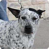 Adopt A Pet :: Domino - Arlington, TX