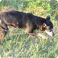 Adopt A Pet :: Pearl - Topeka, KS