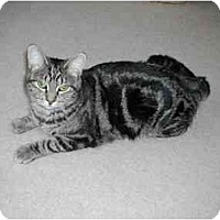 Adopt A Pet :: Dawn - Toronto, ON