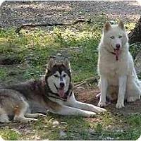 Adopt A Pet :: Malachi & Sugar - Belleville, MI