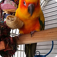 Adopt A Pet :: Tango - Lenexa, KS