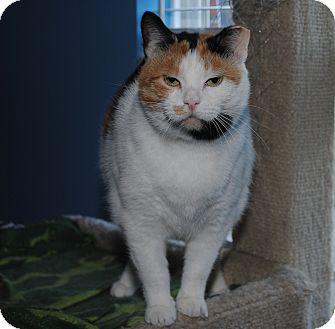 Calico Cat for adoption in Waxhaw, North Carolina - Karma