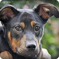 Adopt A Pet :: Gary - Reisterstown, MD