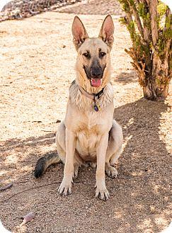 German Shepherd Dog Mix Dog for adoption in Phoenix, Arizona - Tessa