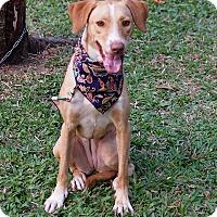 Adopt A Pet :: Ethel - Castro Valley, CA