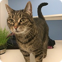 Adopt A Pet :: Lovebug - Novato, CA