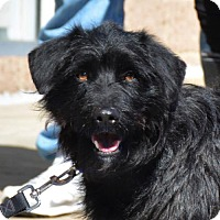 Adopt A Pet :: Gizmo - Rockville, MD