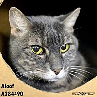 Adopt A Pet :: ALOOF - Conroe, TX