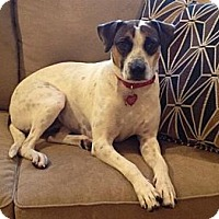 Adopt A Pet :: Dorothy- local! - East Hartford, CT