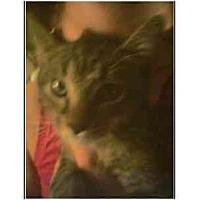 Adopt A Pet :: Macgyer - Owasso, OK
