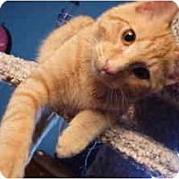 Adopt A Pet :: Rufus - Milwaukee, WI