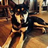 Adopt A Pet :: Clark - Post Falls, ID