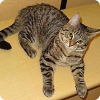 Adopt A Pet :: Jackie - Bentonville, AR