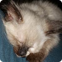 Adopt A Pet :: Mira - Davis, CA