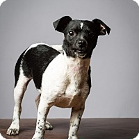 Adopt A Pet :: Lil Abner - Meet Him! - Norwalk, CT