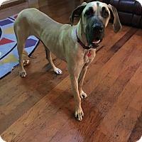Adopt A Pet :: Daisy - Austin, TX
