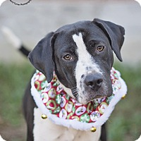Adopt A Pet :: Cookie - Kingwood, TX