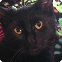 Adopt A Pet :: Cassilda - New York, NY