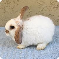 Adopt A Pet :: Marshmallow - Bonita, CA