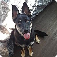 Adopt A Pet :: NALA - Winnipeg, MB