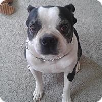 Adopt A Pet :: Ralph - Las Vegas, NV