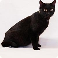 Adopt A Pet :: Charon - Toccoa, GA