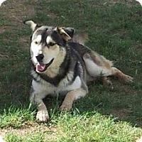 Adopt A Pet :: Zippy - Scottsdale, AZ