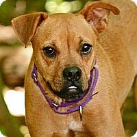Adopt A Pet :: Joon - Hastings, NY