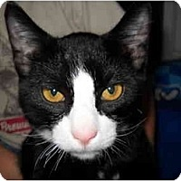 Adopt A Pet :: Sly - Washington Terrace, UT
