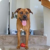 Adopt A Pet :: Lyla - Mission Viejo, CA