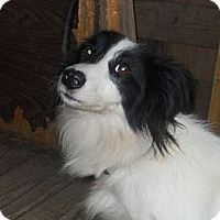 Adopt A Pet :: Oreo - Charlotte, NC