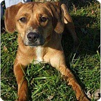 Adopt A Pet :: Karma - Toronto/Etobicoke/GTA, ON