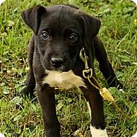 Adopt A Pet :: Dugan - Staunton, VA