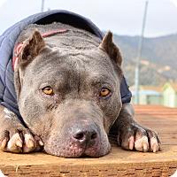 Adopt A Pet :: Mojito - Acton, CA