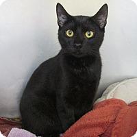 Adopt A Pet :: Google - Trevose, PA