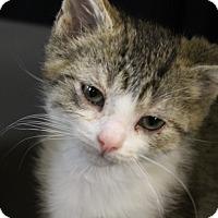 Adopt A Pet :: Mr. Bubbles - Medina, OH