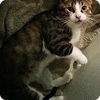 Adopt A Pet :: Rafael - Byron Center, MI