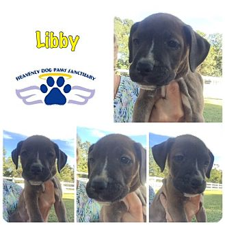 Boxer Puppy for adoption in Folsom, Louisiana - Libby