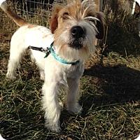 Adopt A Pet :: Tony - Cumberland, MD