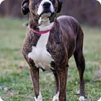 Adopt A Pet :: Deanna ADOPTION PENDING - Waldorf, MD