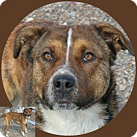Shepherd (Unknown Type) Mix Dog for adoption in Idaho Falls, Idaho - Finnegan