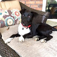 Adopt A Pet :: Oliver aka Ollie - Munford, TN