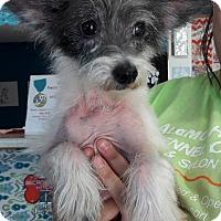 Adopt A Pet :: Blossom - San Antonio, TX