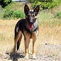 Adopt A Pet :: Olive - San Diego, CA