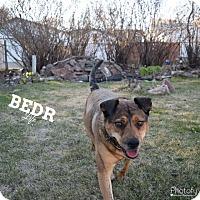 Adopt A Pet :: Sweetie - Regina, SK