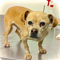 Adopt A Pet :: Lil John - Eugene, OR