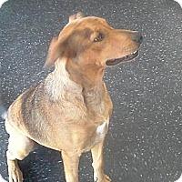 Adopt A Pet :: Indy - Bedford, TX