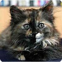 Adopt A Pet :: Tali - Portland, OR