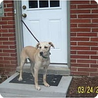 Adopt A Pet :: PEYTON - Rossford, OH